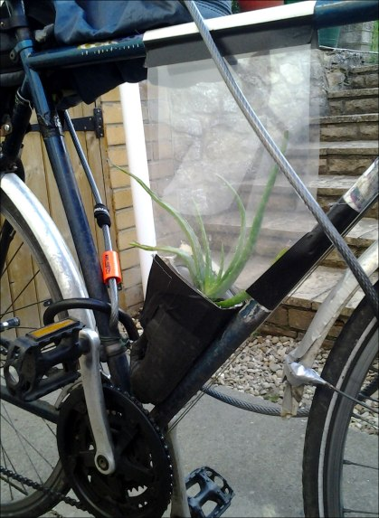 bike_greenhouse_oct2013